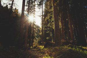 klaus_joehle_blog21